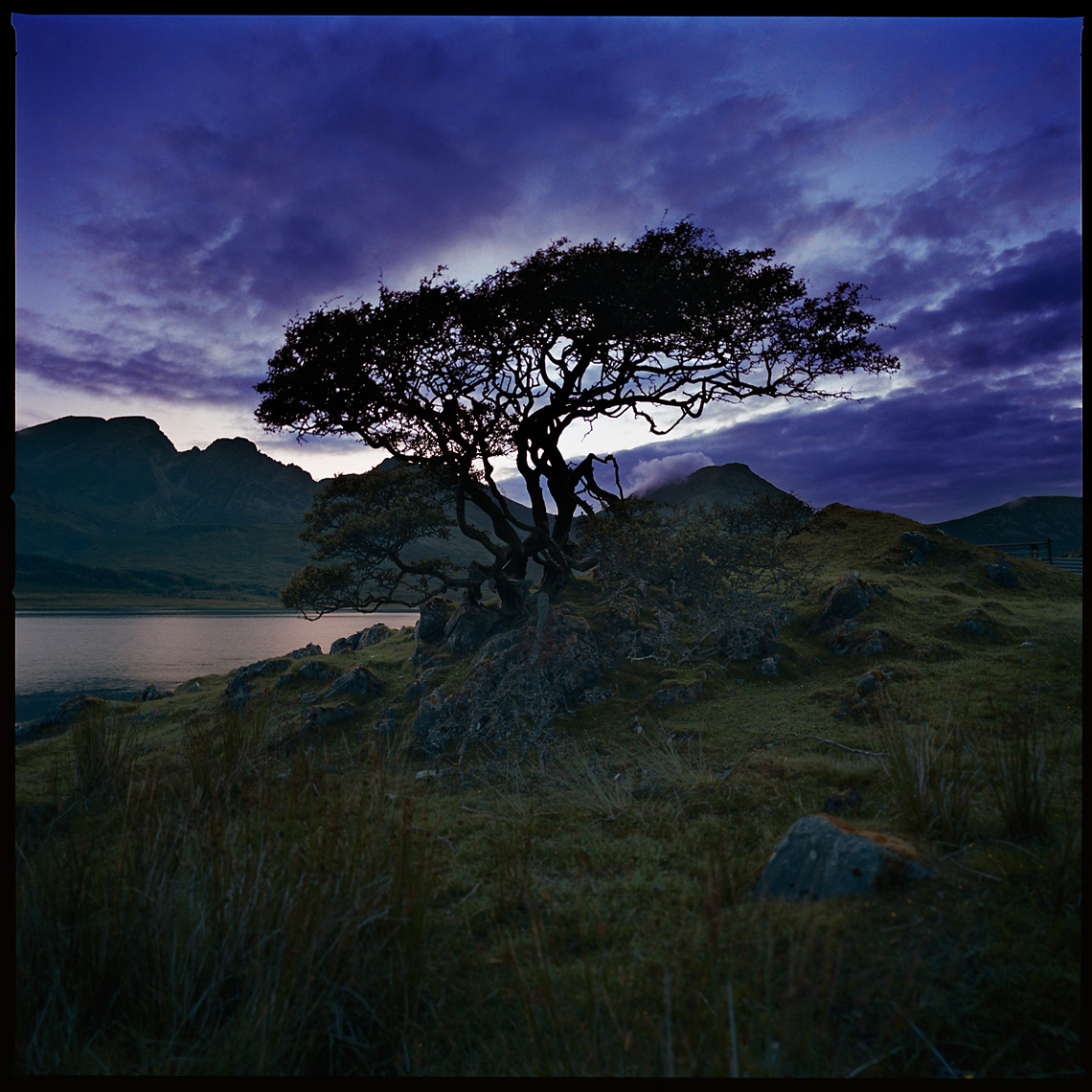 Tree and Cuillin Hills Isle of Skye Scotland Landscape Photograph